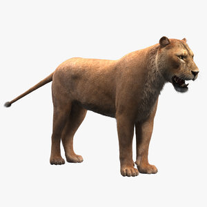 Lioness-Fur1