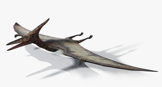 Pteranodon1