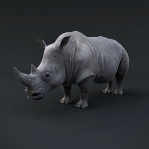 Realistic-Rhino1