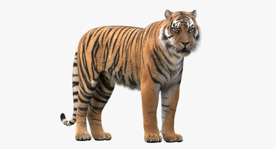 Tiger-Rigged-Fur1