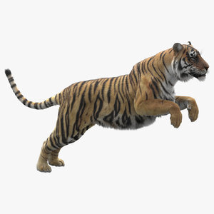 Tiger-Rigged-Maya-3D-model1