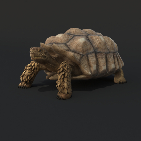 Turtle-Rigged1