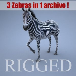 Zebra-RIGGED1