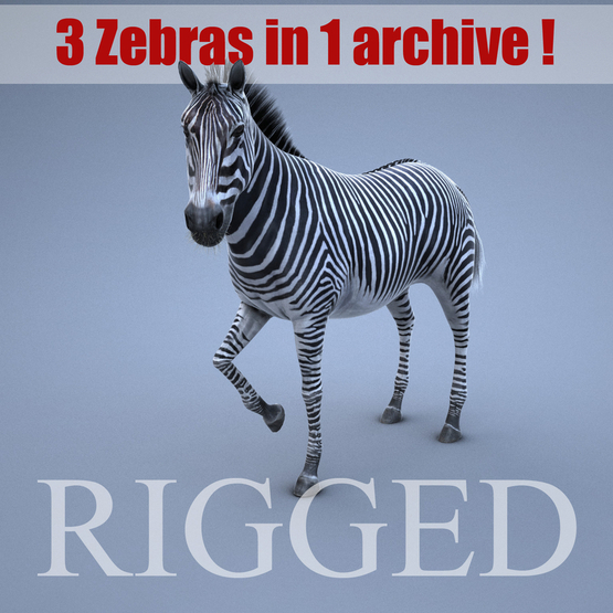 Zebra-RIGGED1